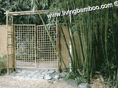Bamboo Pergola and Gate-Garden Net Gate with Pergola